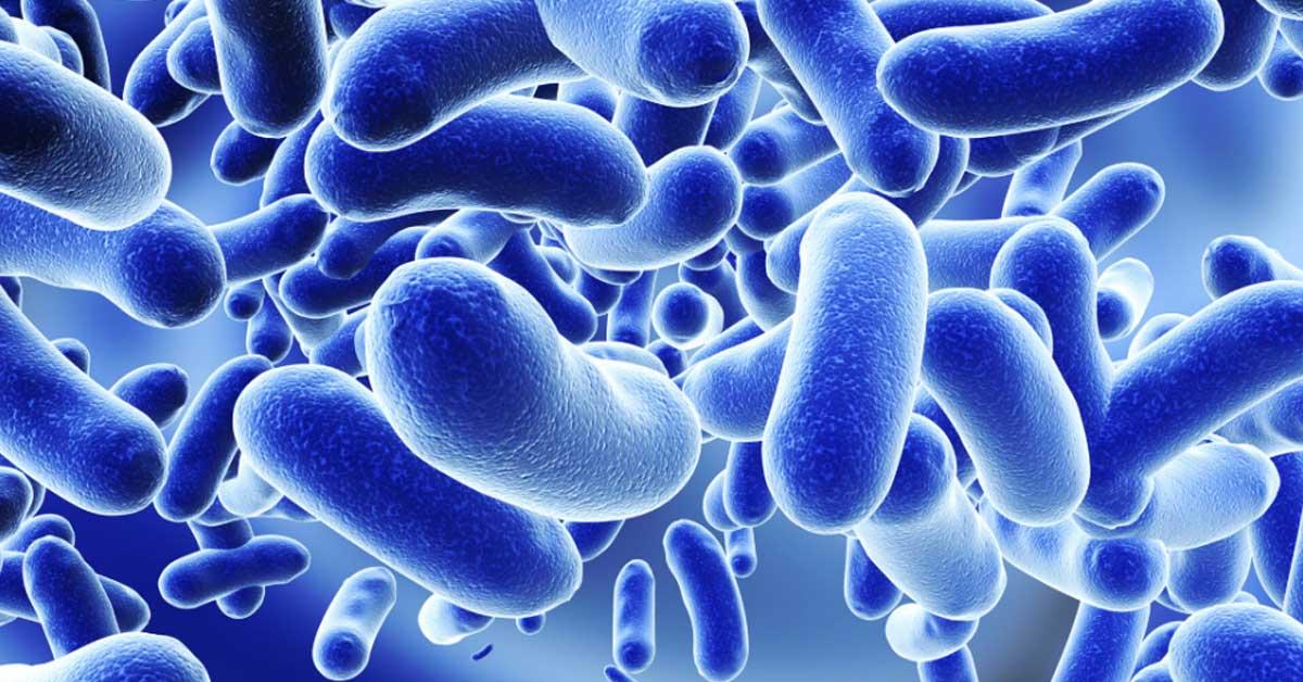microbiota-intestino-batteri-Patrizia Di Mare-nutrizionista-Augusta-Siracusa-Lentini