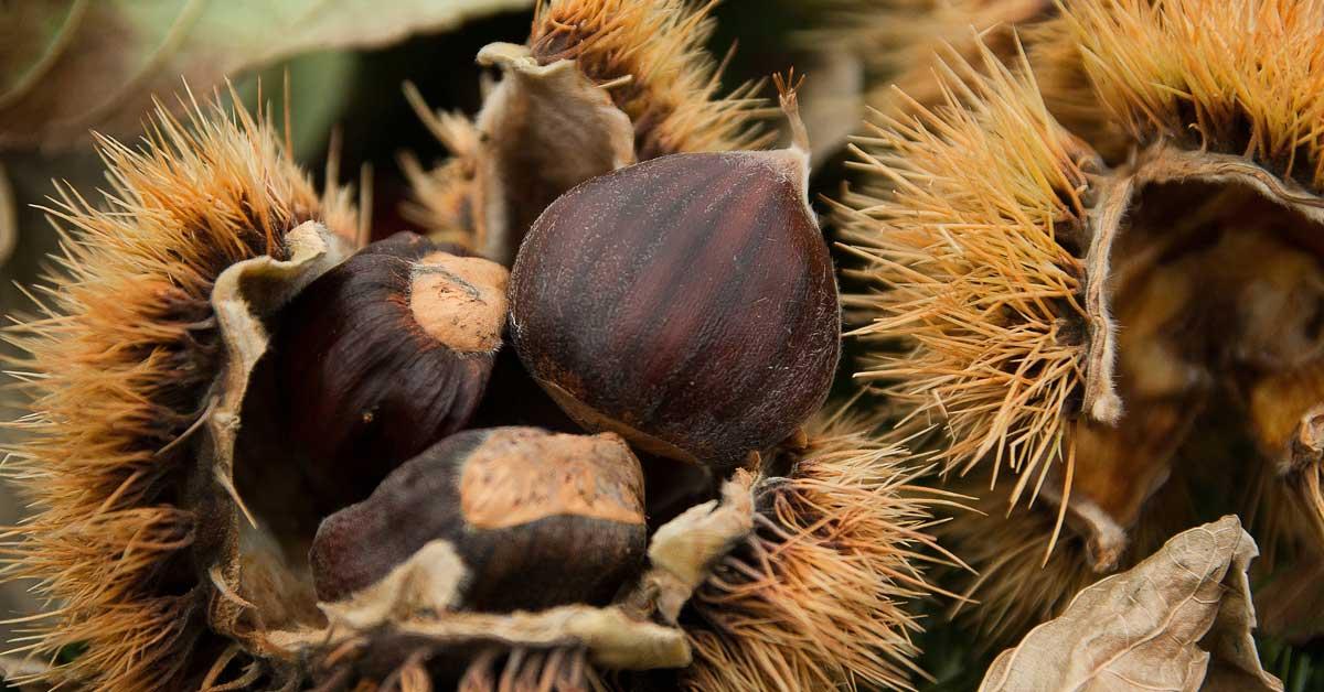 castagne-capelli-vitamine-acqua-Patrizia Di Mare-Studio di Nutrizione-Siracusa-Augusta-lentini-nutrizionista