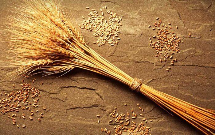 grani antichi-vitamine-minerali-fibre-Patrizia Di Mare-nutrizionista-Siracusa-Augusta-Lentini